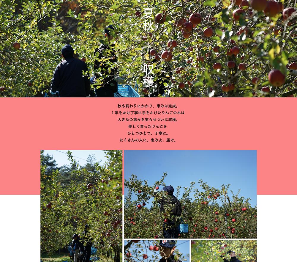 FARM IWABUCHI WEBDESIGN / 岩渕ファーム